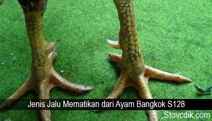Jenis Jalu Mematikan dari Ayam Bangkok S128